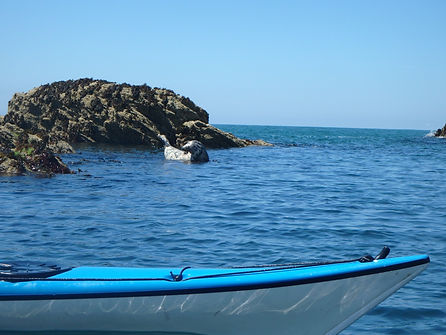 Watching seals from kayak