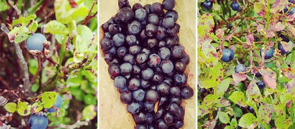 Are you berry healthy?