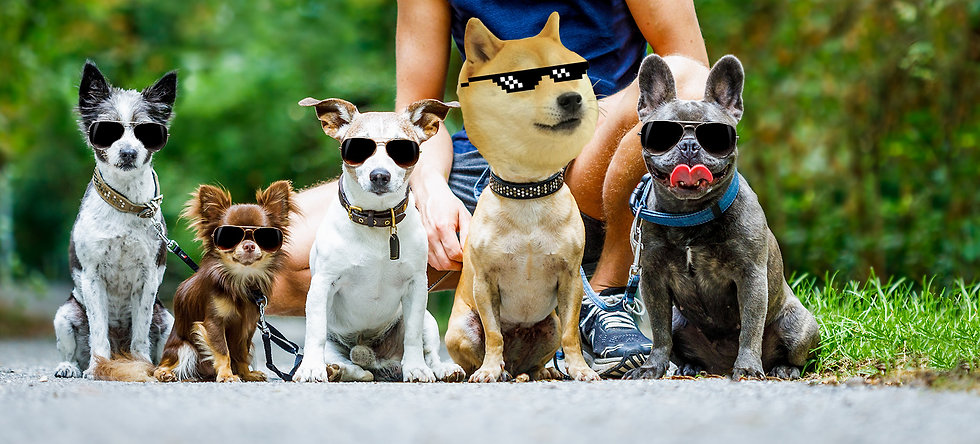 Good Doge 3.jpg