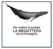 MEGATTERApersa.jpg