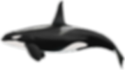 orca (Copy)_edited.png