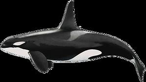 orca (Copy)_edited.png
