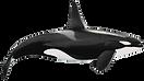 orca (Copy).png
