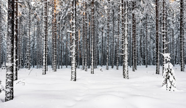 37. Vinterträd