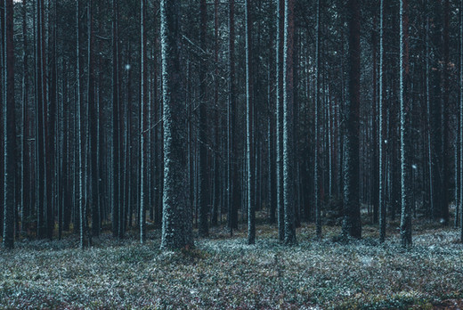 6. Nordkalotten