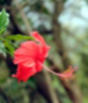 red%2520flower_edited_edited.jpg