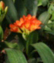 Tropical%20Flowers%20_edited.jpg