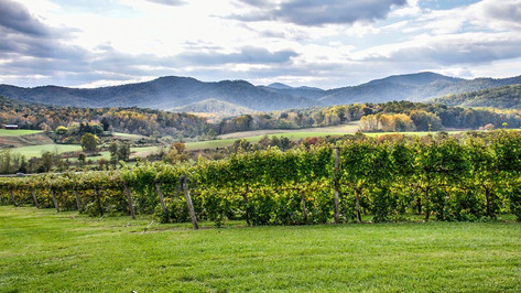 Some of the best wineries in Virginia are only an hour's drive from Washington DC. With nearly 300 wineries and dozens of wine trails surrounded by lavish, breath-taking scenery, quaint small towns and monumental historic sites, Virginia is a wine destination unlike any other. Here you can easily spend the day swirling beautiful wine that matches the postcard perfect views.