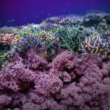 Moss & Koralle