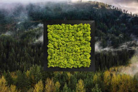 Nature & Moss