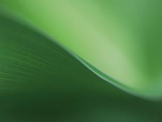 """O """"milagre"""" do vestido verde"""
