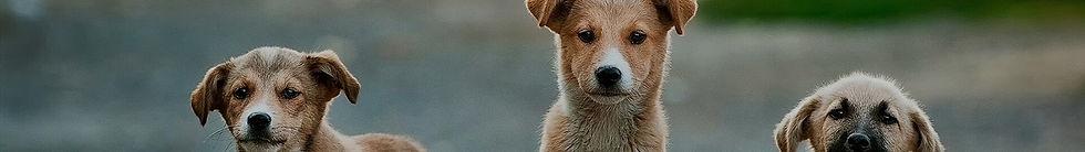 pets-banner (1).jpg