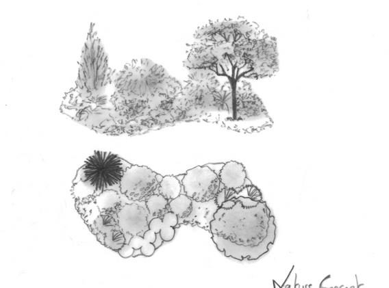 massifs arbustifs.png