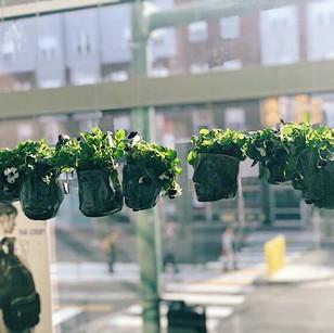 Hanging garden- ceramics