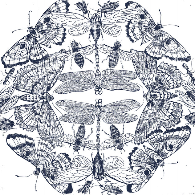 """Insect circle"" Intaglio print"