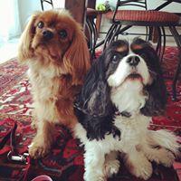Lucy & Finn