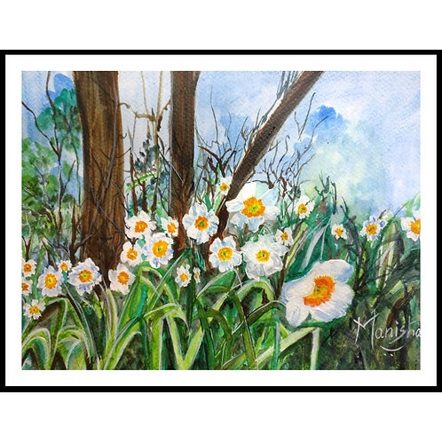 Wild Daffodils | Watercolor on Paper