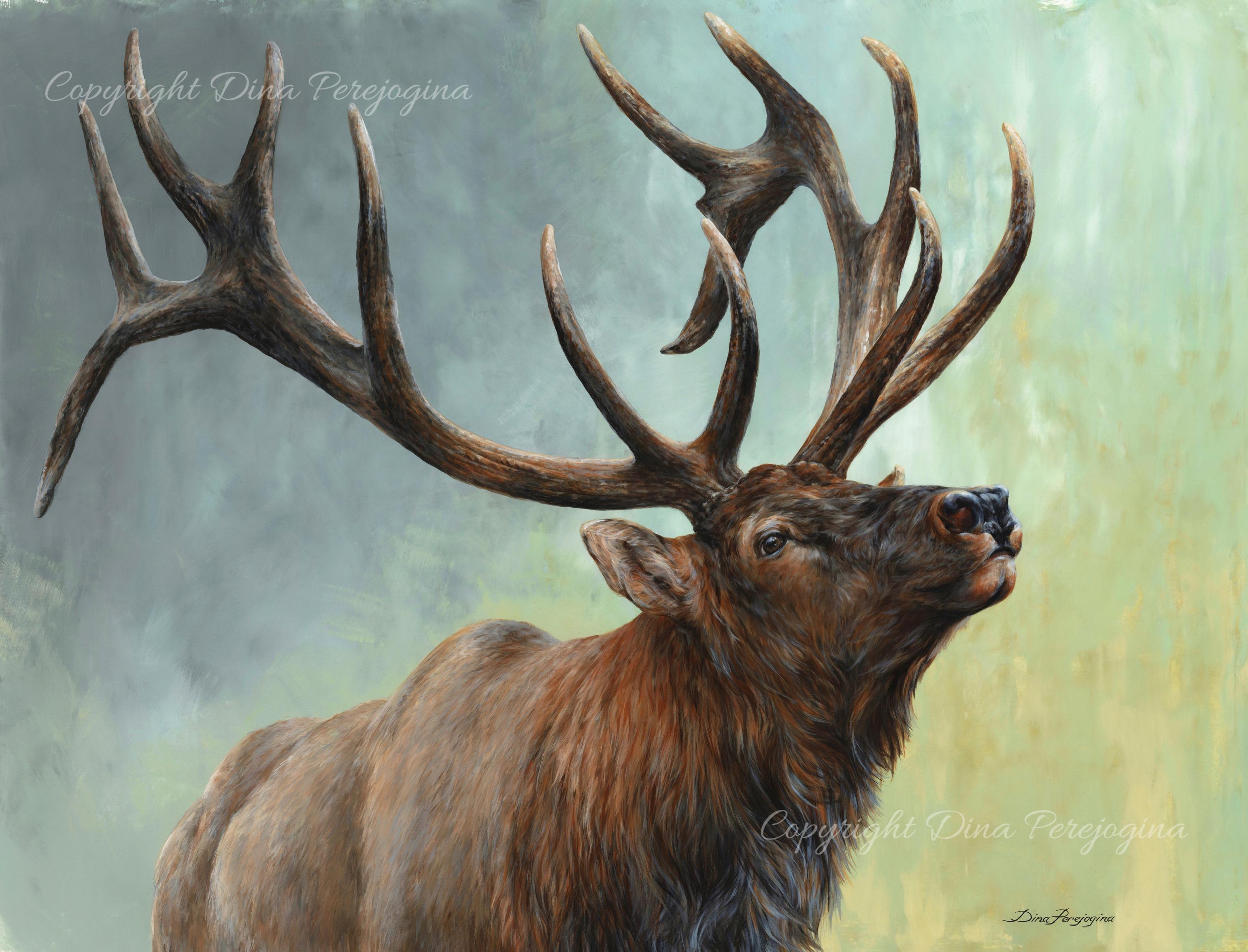 rising bull elk