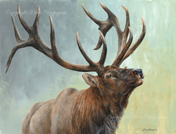 'Rising Bull Elk'