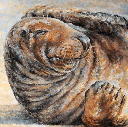 'Basking Seal'