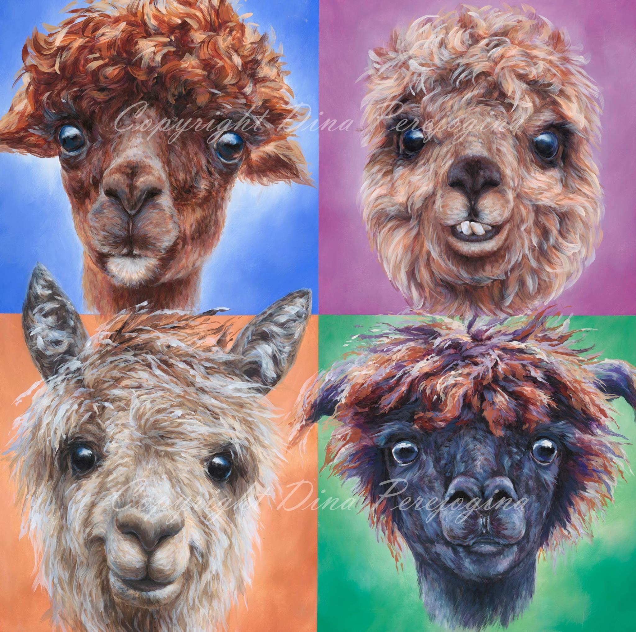 'Alpacas'