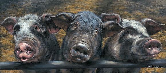 'Three Little Piglets'