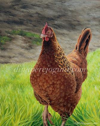 'Chicken'
