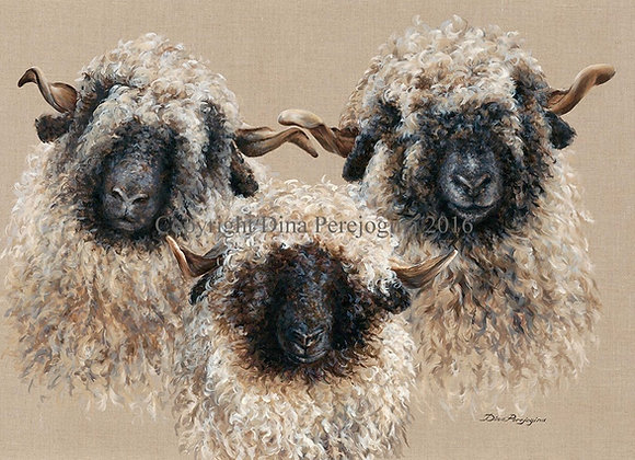 Valais Blacknose SOLD