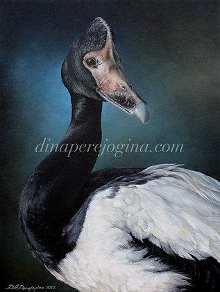 'Magpie Goose'