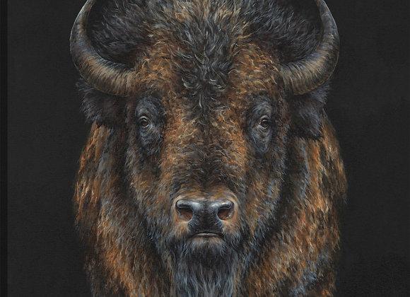 Bison Presence
