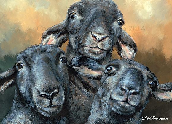 Lamb Chop Bop
