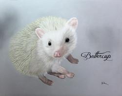 'Buttercup'