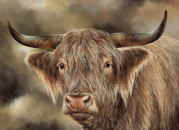 Winsome Bull
