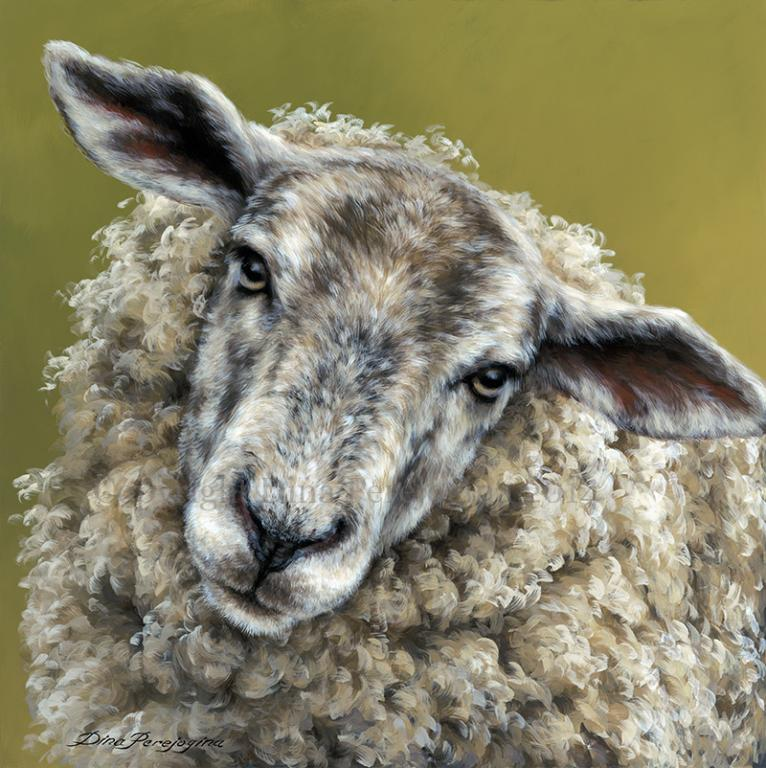 'Inquisitive Ewe'