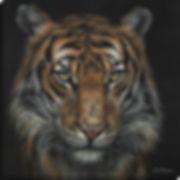 Open Edition Prints Tiger Presence 80x80