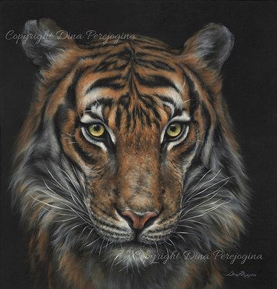 'Tiger Presence'
