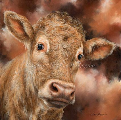 'Charolais Calf'