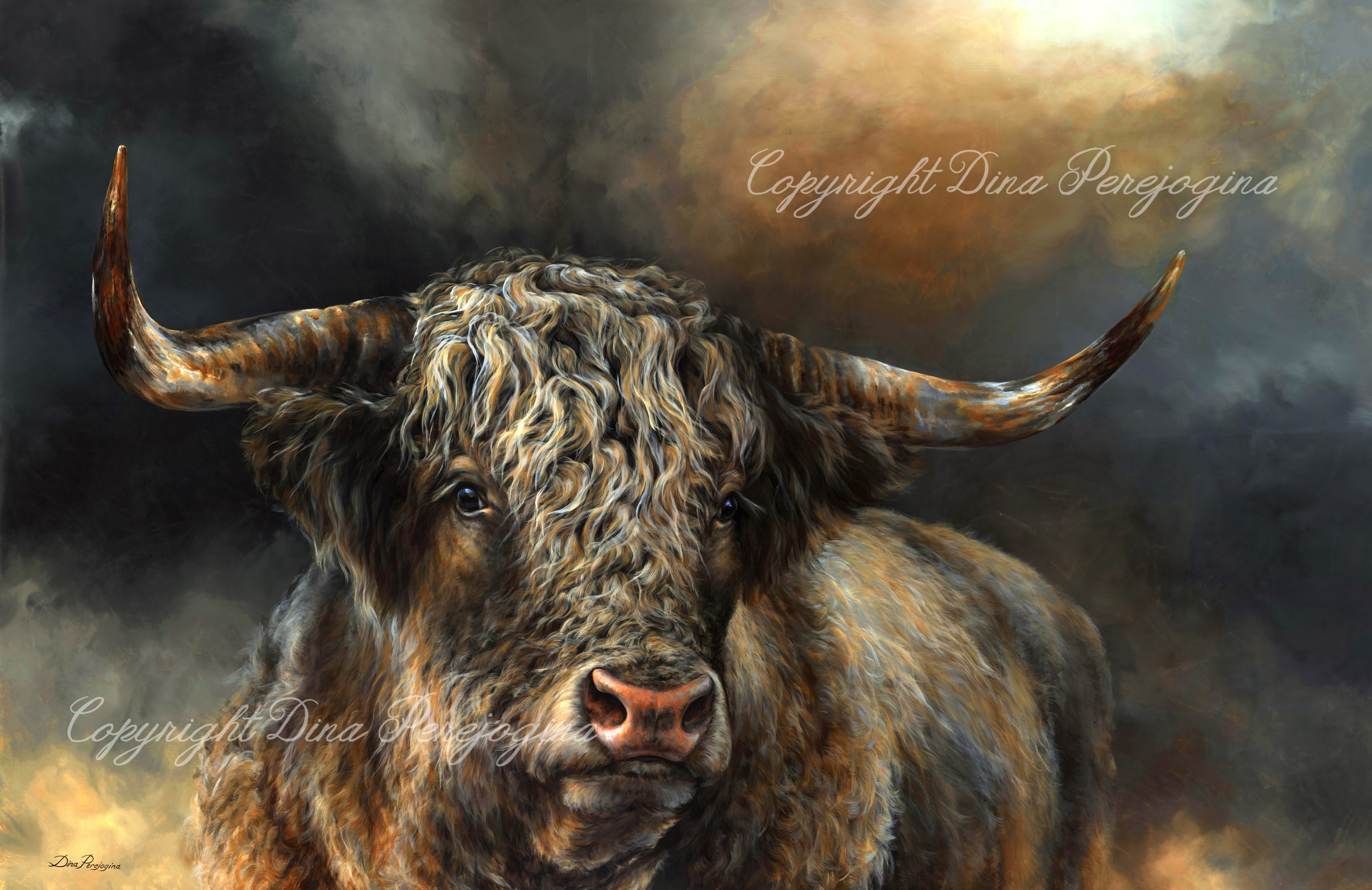 Grand Kyloe Bull-2