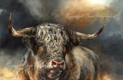 'Grand Kyloe Bull'