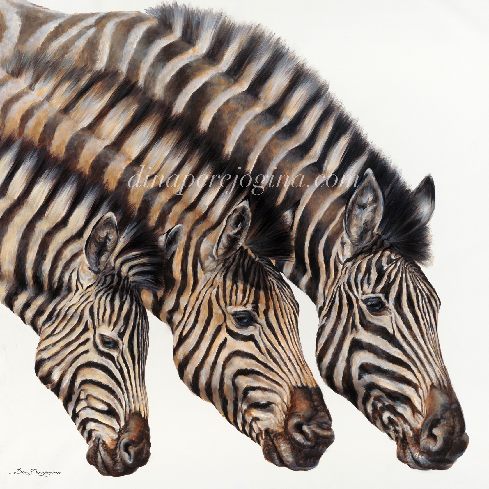 'Crossing Zebras'