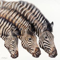'Crossing Zebras'