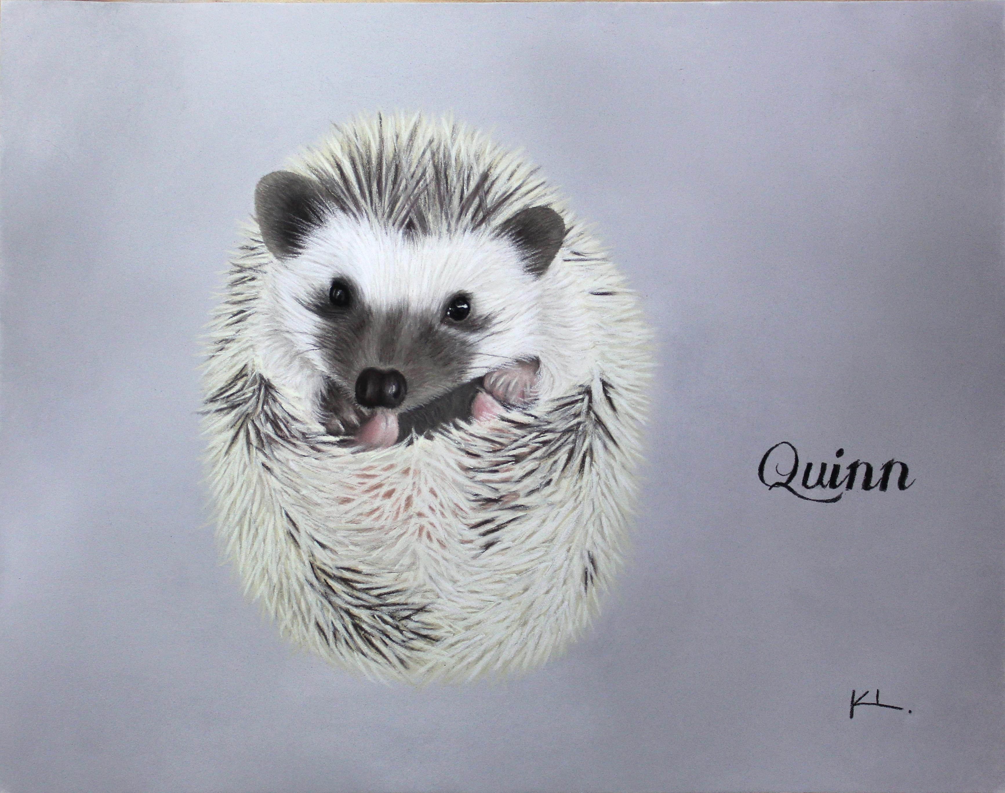 'Quinn'