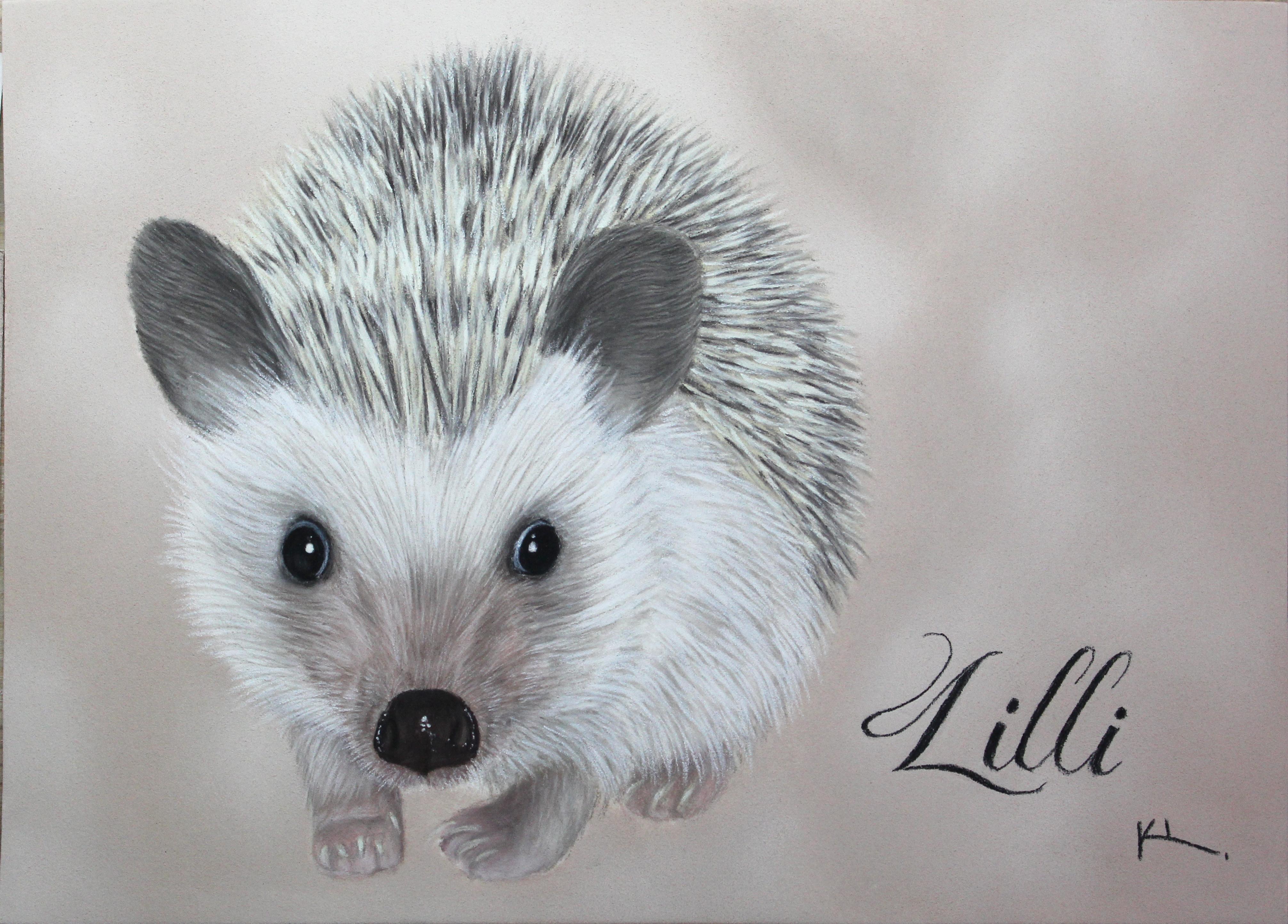 'Lilli'