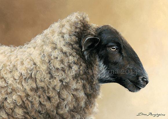 'Easy-Going Ewe'