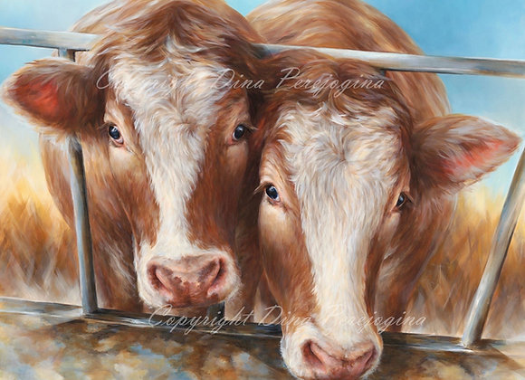 Simmental Couple