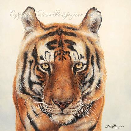 """""""Munna Tiger"""""""