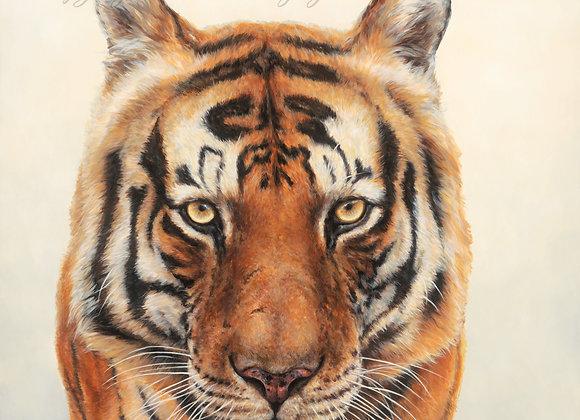 'Munna Tiger' (Sold)