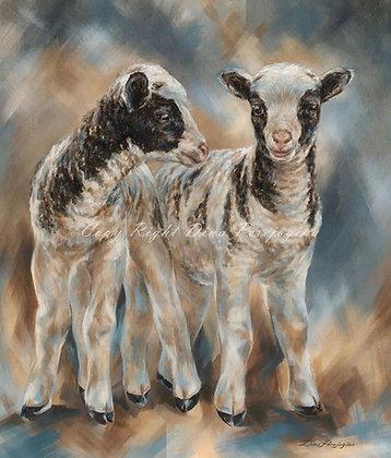 'Jacob Baby Lambs'