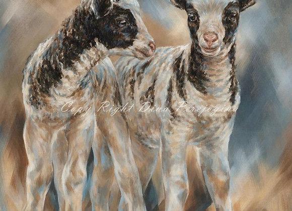 Jacob Baby Lambs