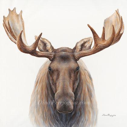 'Moose'